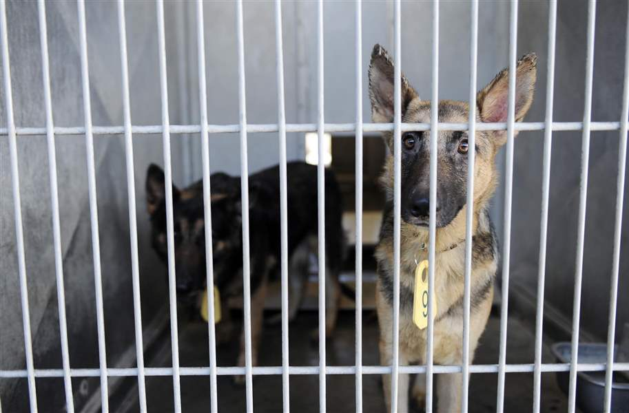 lucas county dog licenses