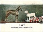 A World War I postcard by Wallace Robinson depicting the 'Yankee Terrier,' which emerged in World War I propaganda as America's fighting spirit in furred form.