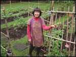 In her Virginia garden, Wanpen Ordonez gets a jump on a cold, wet season by growing tomato plants through winter.