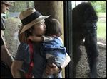 Risako Kita of Detroit holds her 18-month-old daughter Yuzuki as they watch a gorilla at the Toledo Zoo. Local zoo leaders say keeping such animals behind glass or fencing is safest.