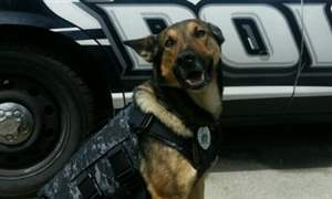 Findlay-Police-Department-s-K9-Shadow-vestg