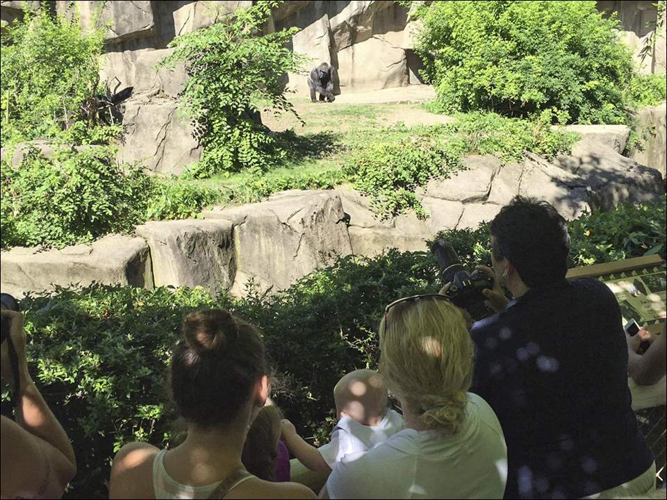 Cincinnati Zoo visitors look at the gorilla exhibit, which has new fortifications.