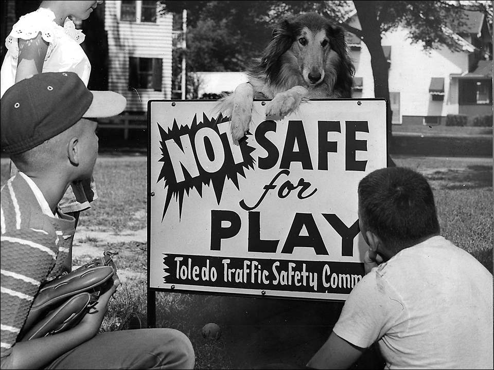 "Four-legged spokesman: ""LET'S PLAY IT SAFE"" Toledo Traffic Safety Committee is installing warning signs at dangerous areas in the City of Toledo where children to play. The first sign, at the intersection of Overland Parkway and Brichall and Lowe Roads prompted this serious meeting. Frm left are James Krieger,12, and his sister Karen, 8, Dusty, the collie, and John Clark, 9. Some 40 such signs will be installed throughout the city. Toledo Blade file photo published July 14, 1960"