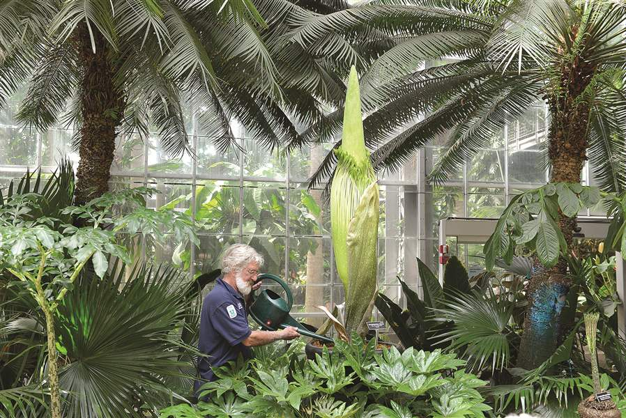 Corpse flowers are invading the east coast the blade - Marie selby botanical gardens coupon ...