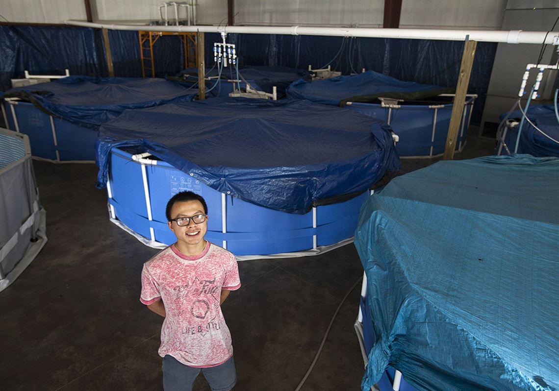Saltwater shrimp farm thrives in state | Toledo Blade