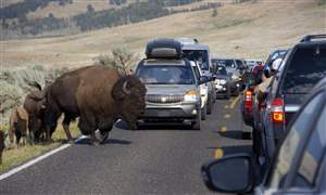 National-Parks-Misbehaving-Tourists