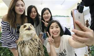 ANIMAL-CAFE-owl-cafe