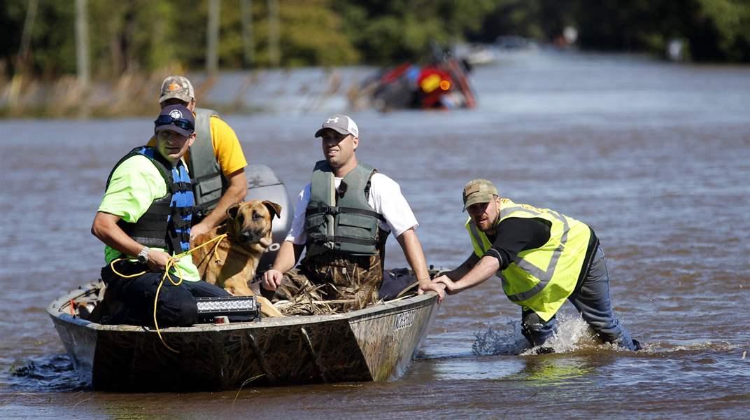Dog Rescue South Virginia