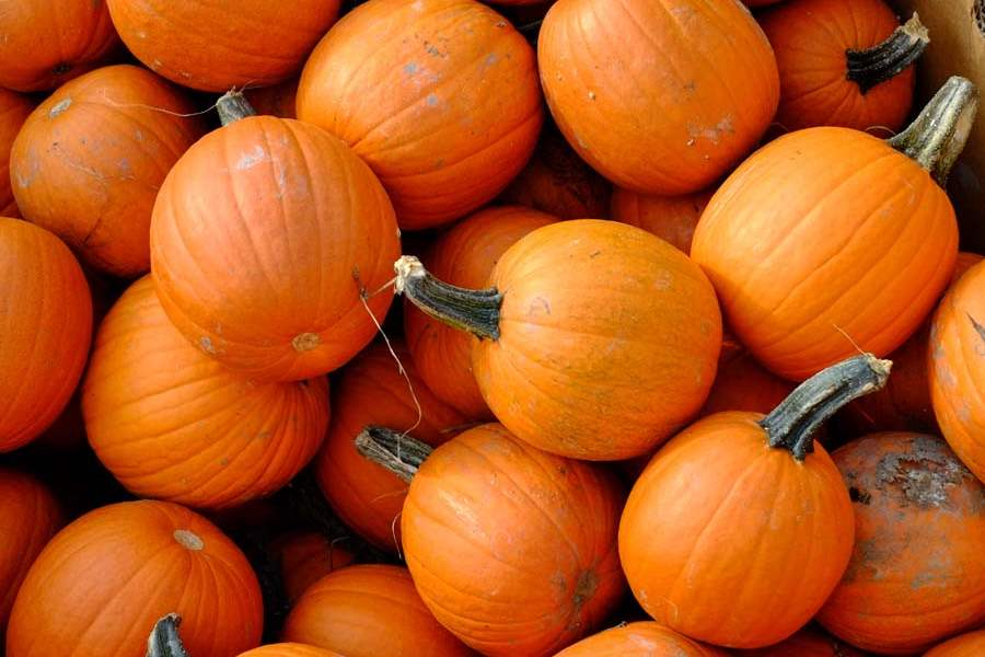 Pupils' pumpkin patch sprouts from tragedy | toledo blade.