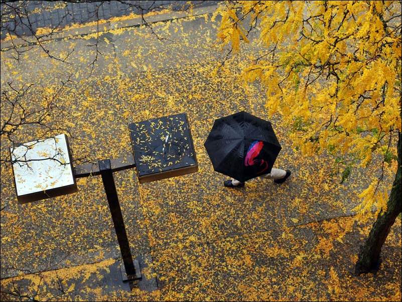A pedestrian uses an umbrella to shield himself from the rain as he walks along a leaf covered sidewalk on Adams Street, between Erie and Ontario streets Oct. 20 in Toledo.