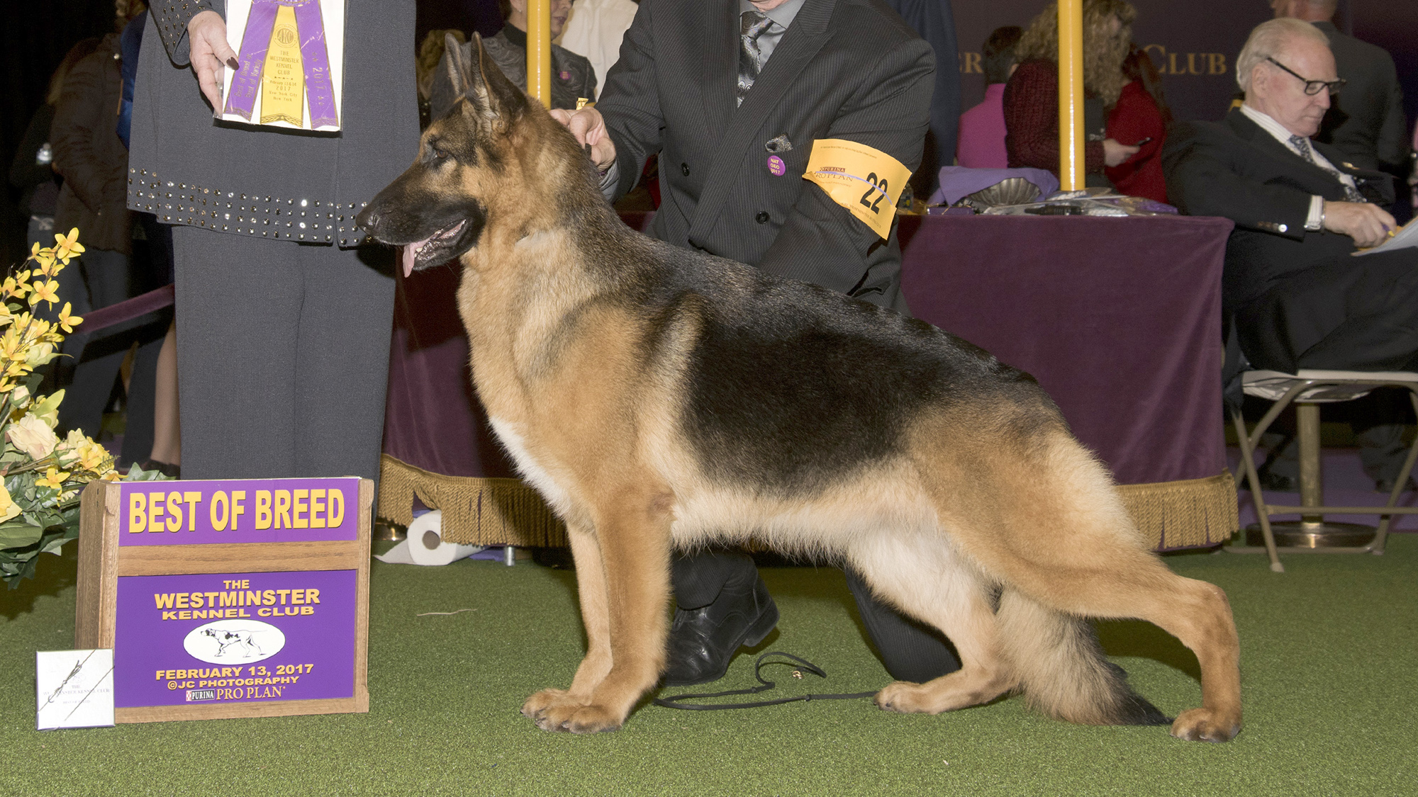 Who Won Best In Show  Dog