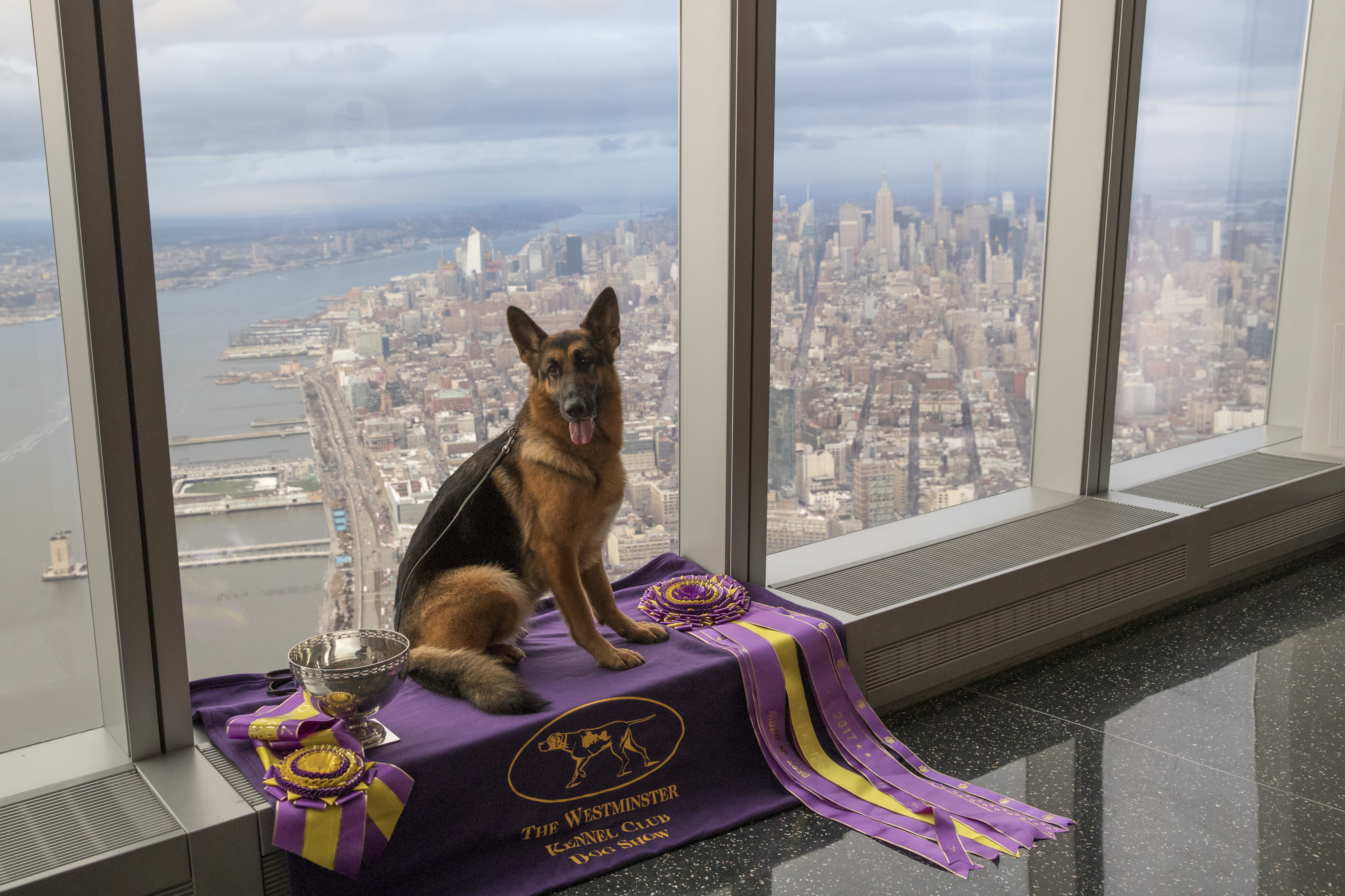 champion springfield twp  dog takes the spotlight in