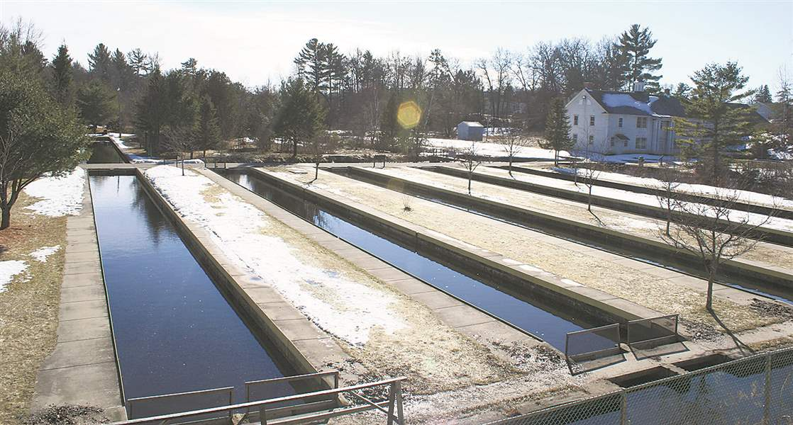 Michigan anglers battle fish farmer in trout heaven the for Fish hatchery michigan