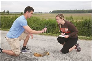 BGSU graduate student Lauren Jonaitis and undergraduate Brennan Brown record information about a squirrel killed on an area road.