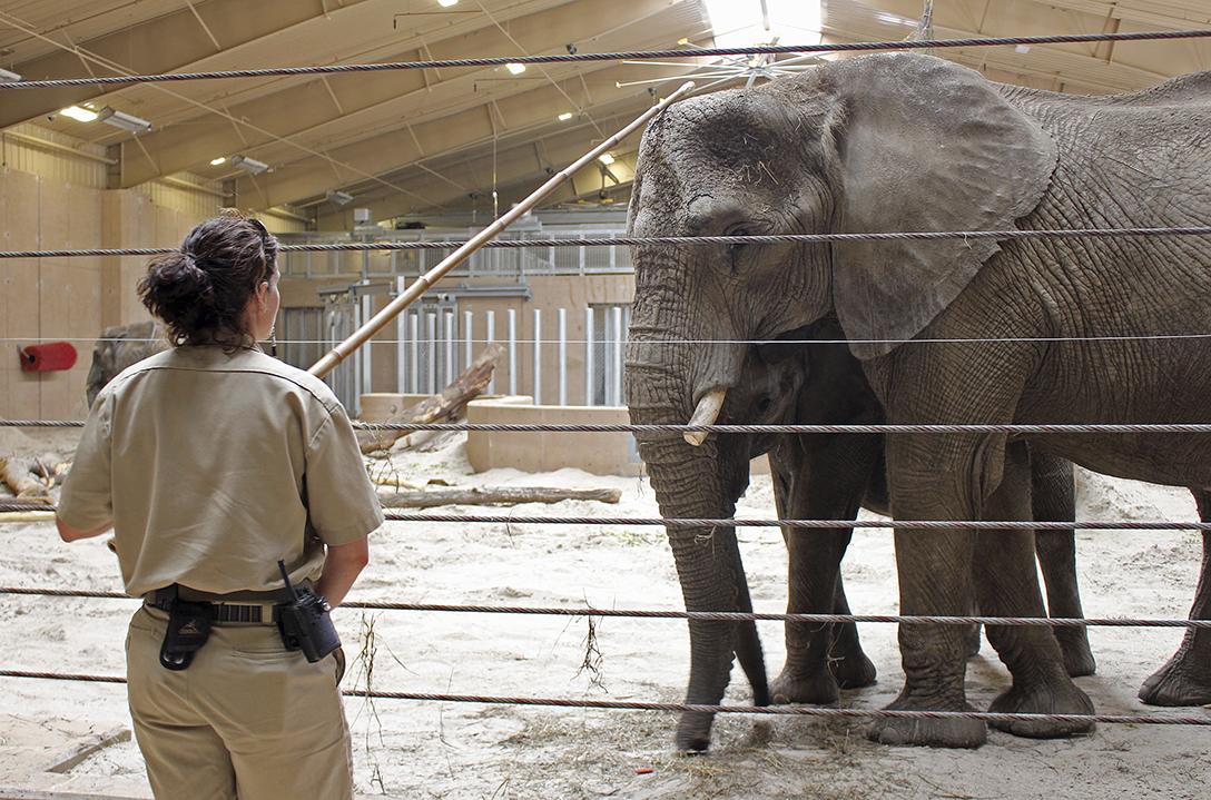 Bittersweet Journey Ahead For Toledo Zoo S Louie The Blade