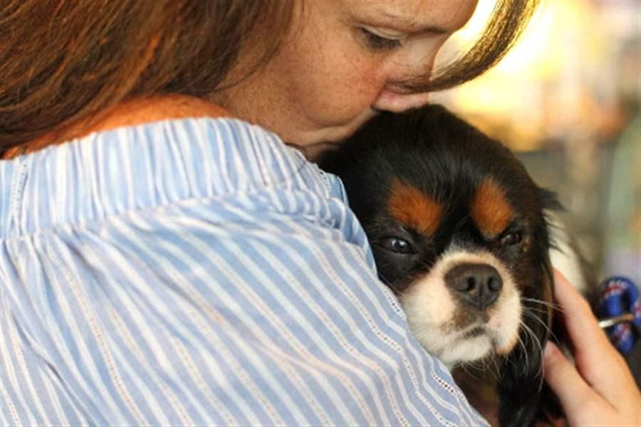 Resultado de imagen para cavalier king charles spaniel and owner hug