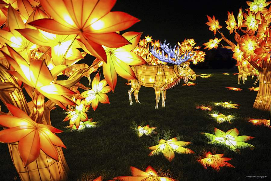 Lanterns To Brighten Toledo Zoo At Fall Events The Blade