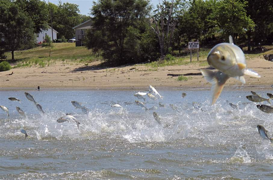 Report to list options for strengthening Asian carp defenses