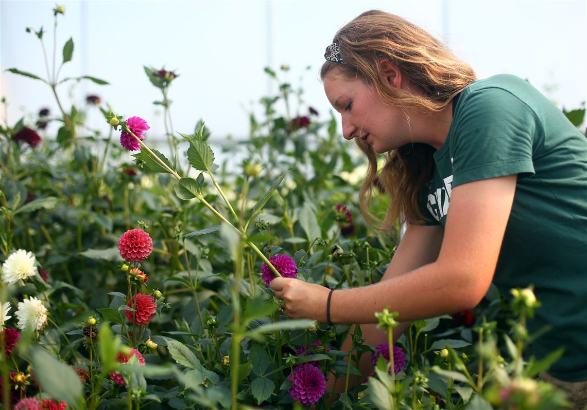 Business Is Blooming At Local Flower Farms The Blade