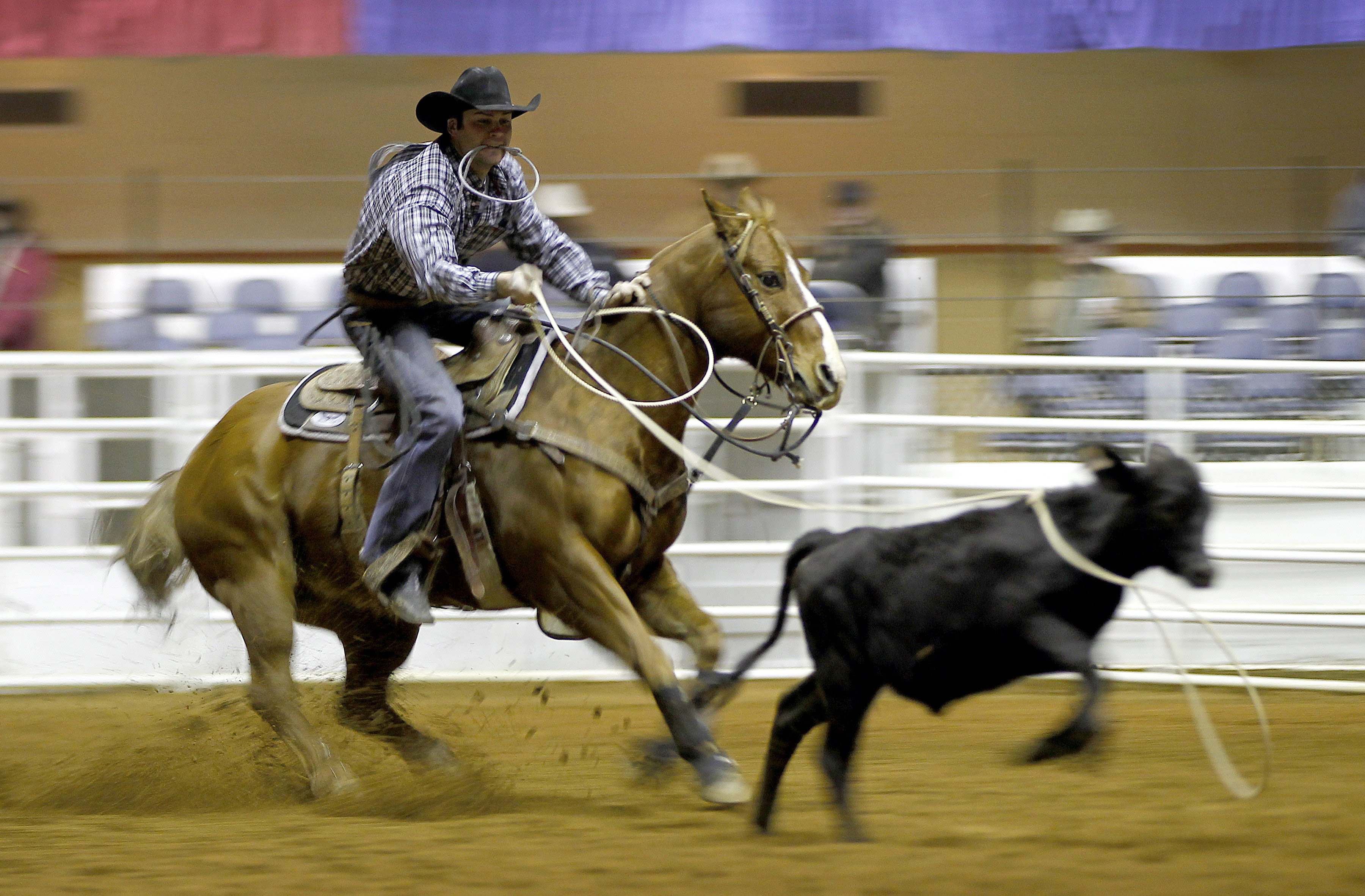 Prca Xtreme Bull Competition Comes To Toledo The Blade