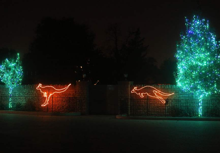 kangaroo light decorations for the lights before christmas at the toledo zoo in toledo on tuesday november 14 - Toledo Zoo Lights Before Christmas