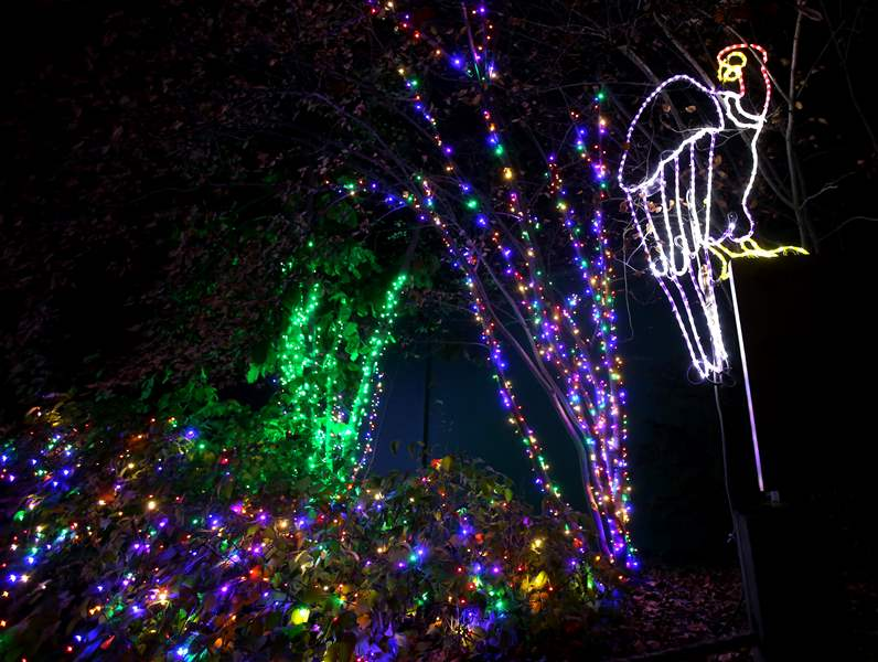 a vulture light decoration for the lights before christmas at the toledo zoo in toledo on tuesday november 14 - Toledo Zoo Lights Before Christmas