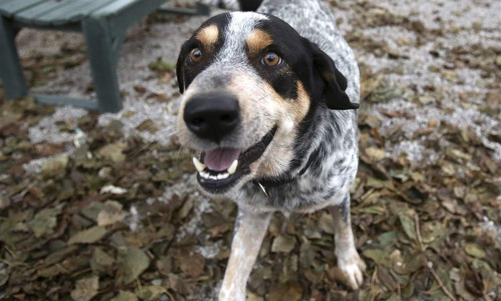CTY-HURRICANEPETS18p-1
