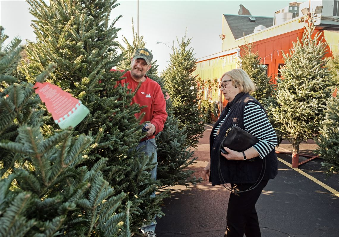 Fresh-cut trees gaining popularity for