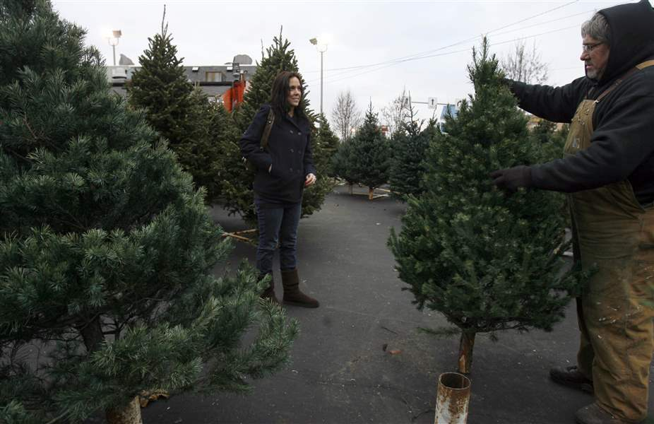 Hike in Christmas tree prices due to tree shortage