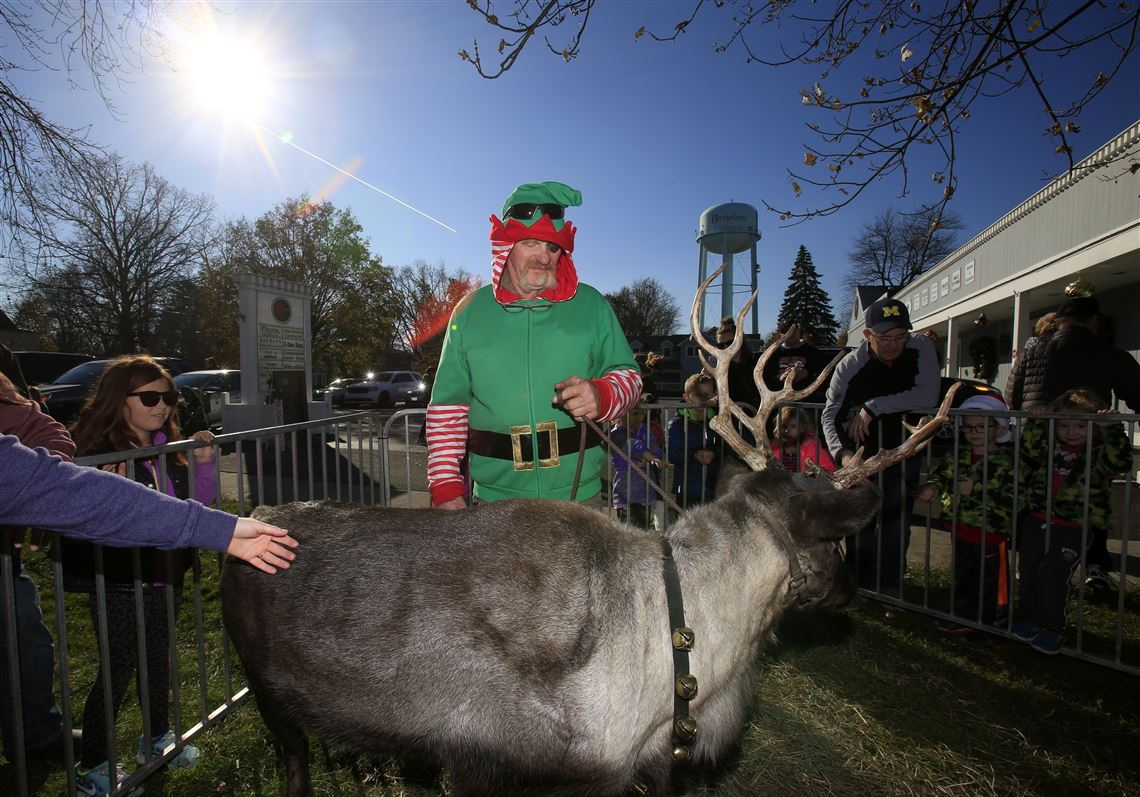 Reindeer For Rent Spruce Up Your Holiday Event With Animals