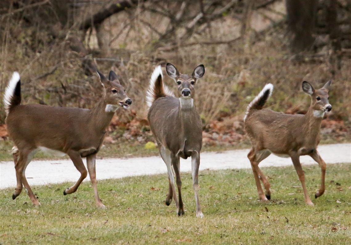 New york straight men dean deer hunter