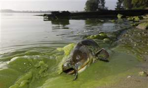 Lake-Erie-Algae-41