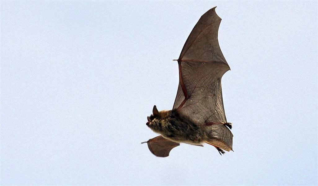 sci bats bos 3 - Picture Of A Bat