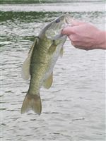 smallmouthbass-JPG
