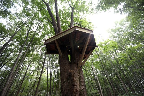 Park Project Will Let You Camp Out In The Treetops The Blade
