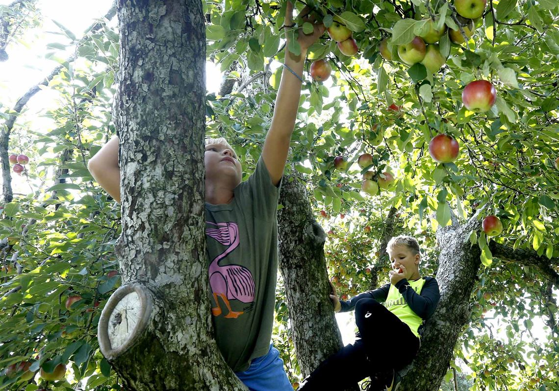 Some Cold Dependent Fruit Trees Hurting Because Of Climate Change The Blade