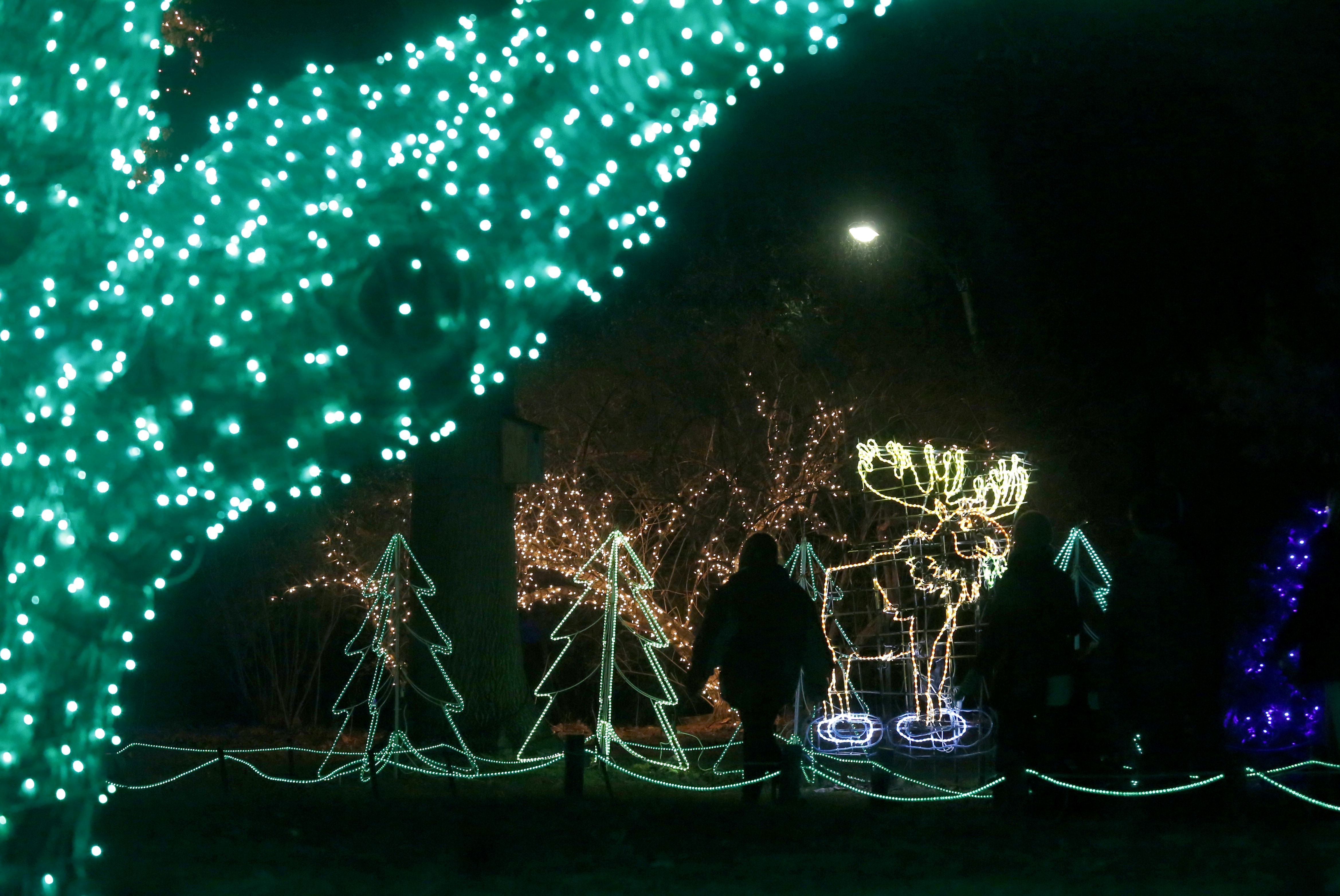 toledo zoos lights display part of holiday trail the blade - Toledo Zoo Lights Before Christmas