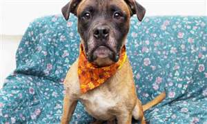 dog adoption toledo ohio