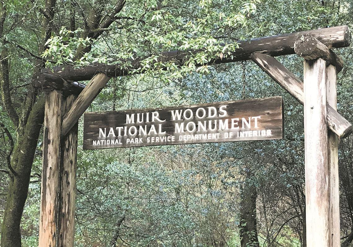 Toledo Magazine Ancient Muir Woods Is A Sacred Sanctuary