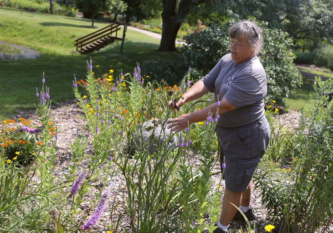 Prairie gres and plants get their due in northwest Ohio ... on prairie climate, prairie winter, prairie seed collecting, prairie landforms, prairie landscape flowers, prairie style landscape ideas, prairie scene, pond design, prairie biome, prairie people,