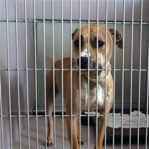 Dogs for Adoption | Toledo Blade
